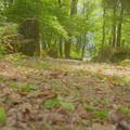 Photos: 林の道