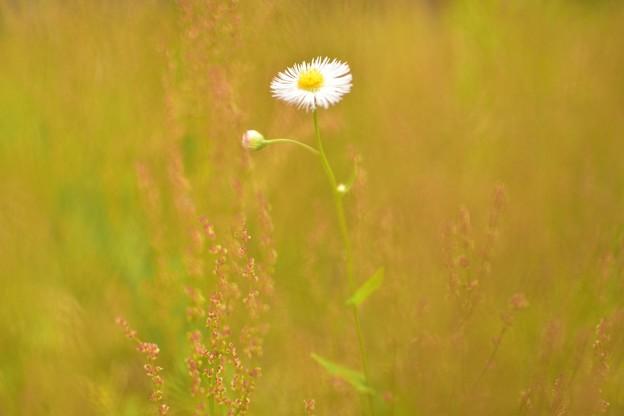 Photos: 一つ咲く