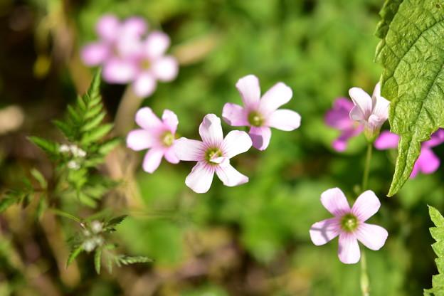 Photos: ピンク色の花たち