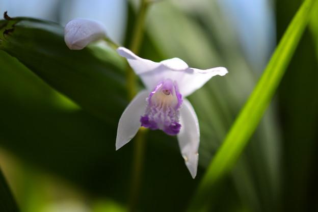 Photos: 白と紫の花