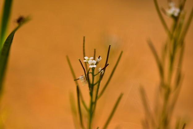 Photos: 白い小さな花