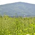 草たちと山