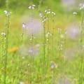Photos: 花たち並び