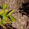 Photos: 葉と影