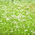 野原の花たち