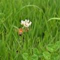 Photos: 花へ