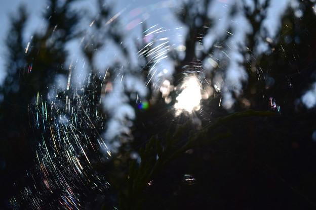 クモの巣と光 1