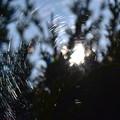 Photos: クモの巣と光 1