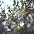 Photos: クモの巣と光 2