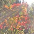 葉の色、光の色