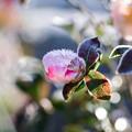 Photos: 花と霜