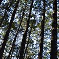 大きな木々