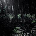 Photos: 光と葉