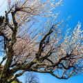 Photos: 青空の下