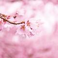 Photos: 咲いた