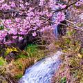 Photos: 花と水
