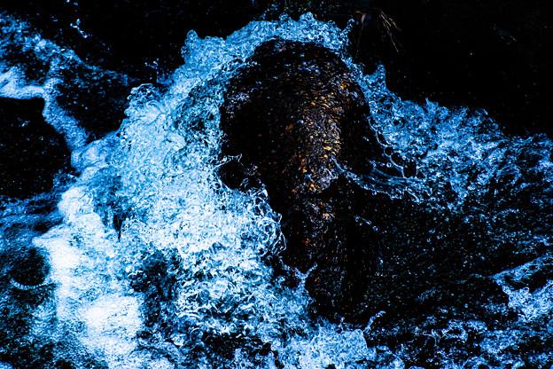 Photos: 水流の中で