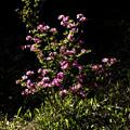 Photos: 花咲く