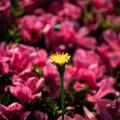 Photos: 花と花