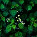 Photos: 葉と花