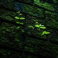Photos: 緑と緑