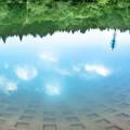 Photos: 水面