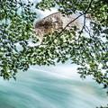 Photos: 葉と流れ