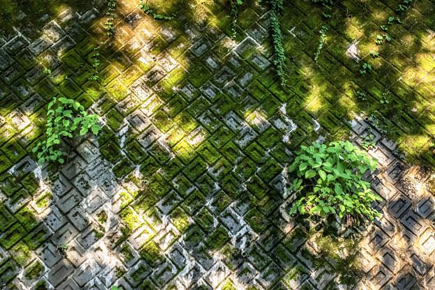 Photos: 木漏れ日