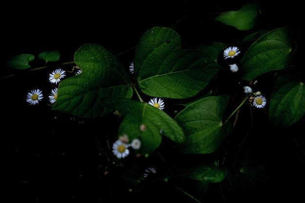 葉っぱとお花