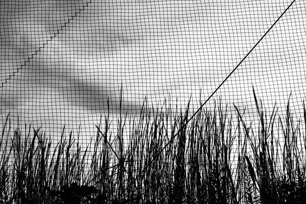 ネットと雑草
