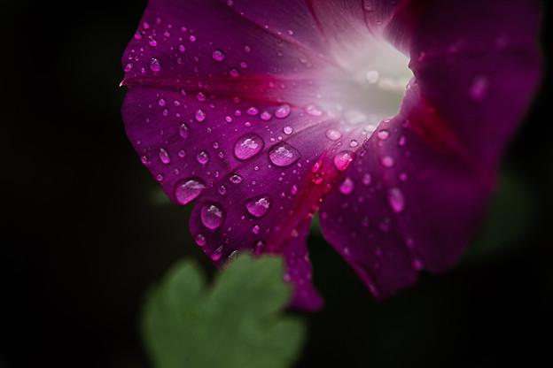 Photos: 雨のあと