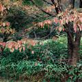 Photos: 葉の色
