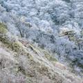Photos: 冬の色