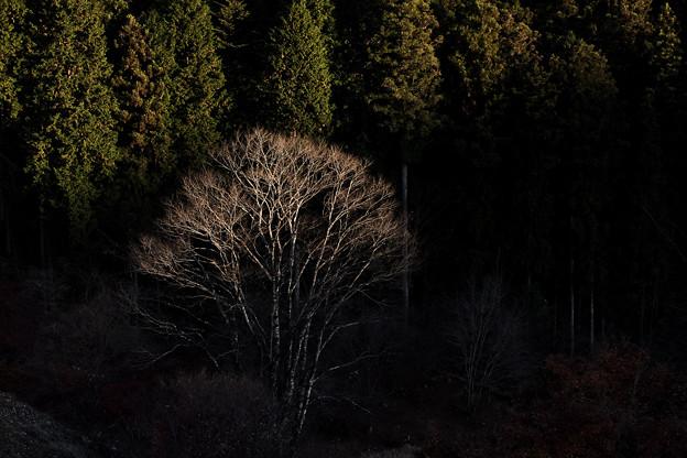 日暮れの光