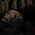 Photos: 日暮れの光