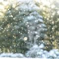 Photos: 雪