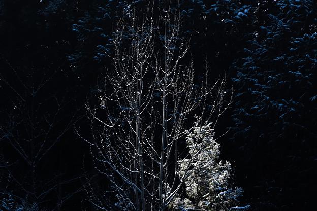 光当たる木