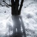 Photos: 寒さの中で
