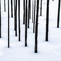 Photos: 雪と木