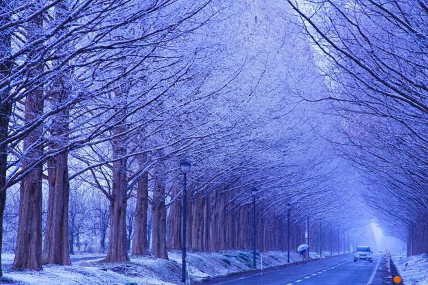 Photos: 冬来たりなば