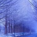 写真: 冬来たりなば