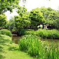 写真: 初夏の緑