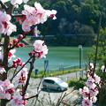 Photos: のどかな春の陽