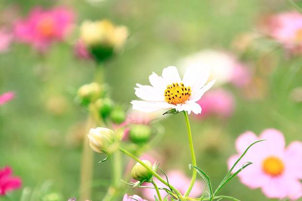 密やかに咲いて!