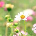 Photos: 密やかに咲いて!