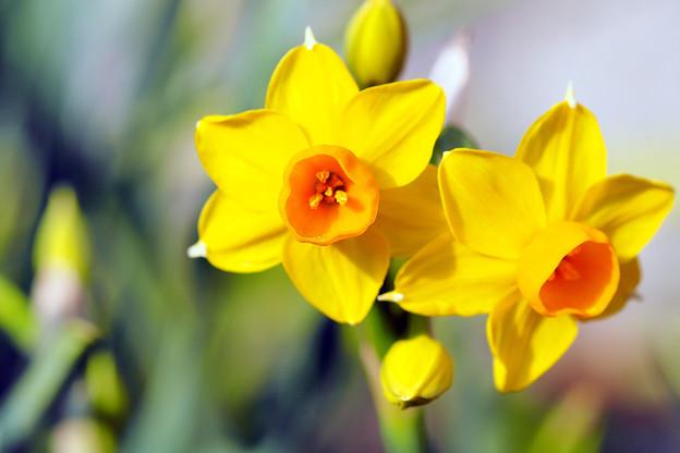 春の陽の中で
