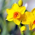 Photos: 春の陽の中で