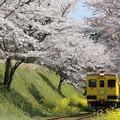 写真: いすみ350形と桜並木 003