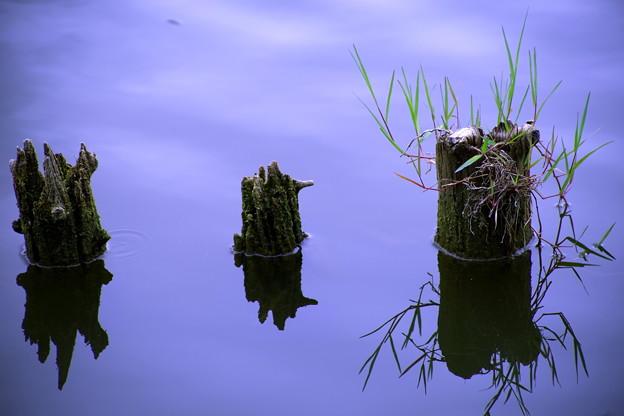 水辺の静寂