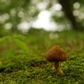 写真: 森の住人